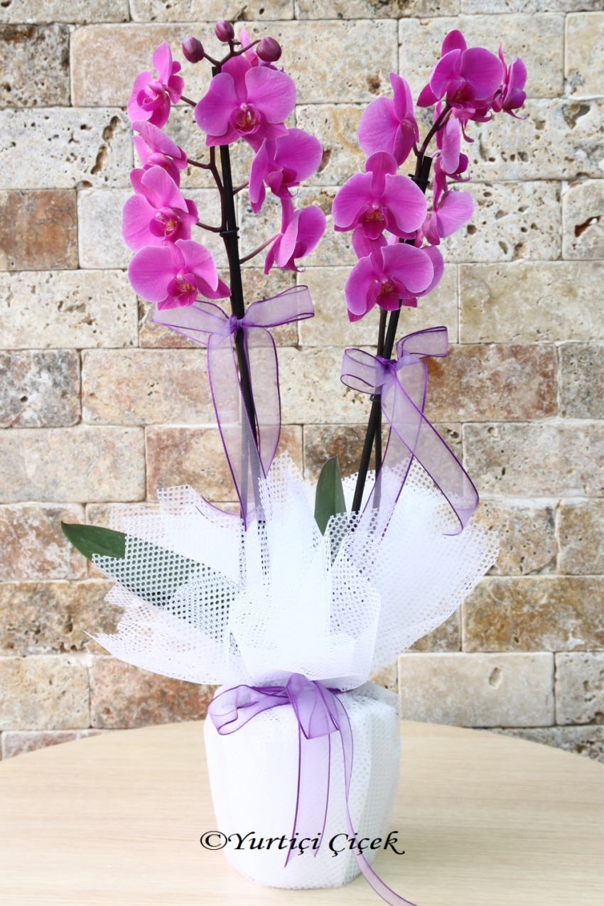 Life around him even more. Tell your love to send with purple orchid.