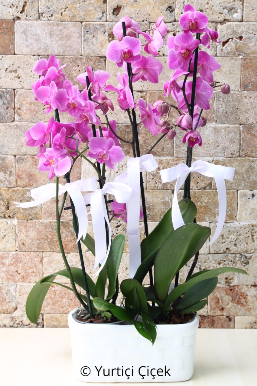 Fuchsia Orchids: 2 Pieces 