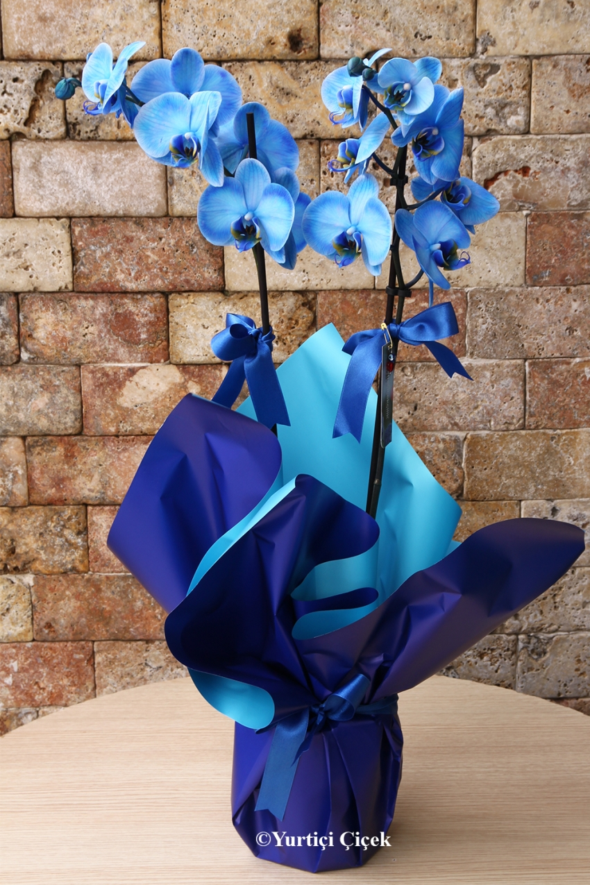 Types Of Blue Orchids