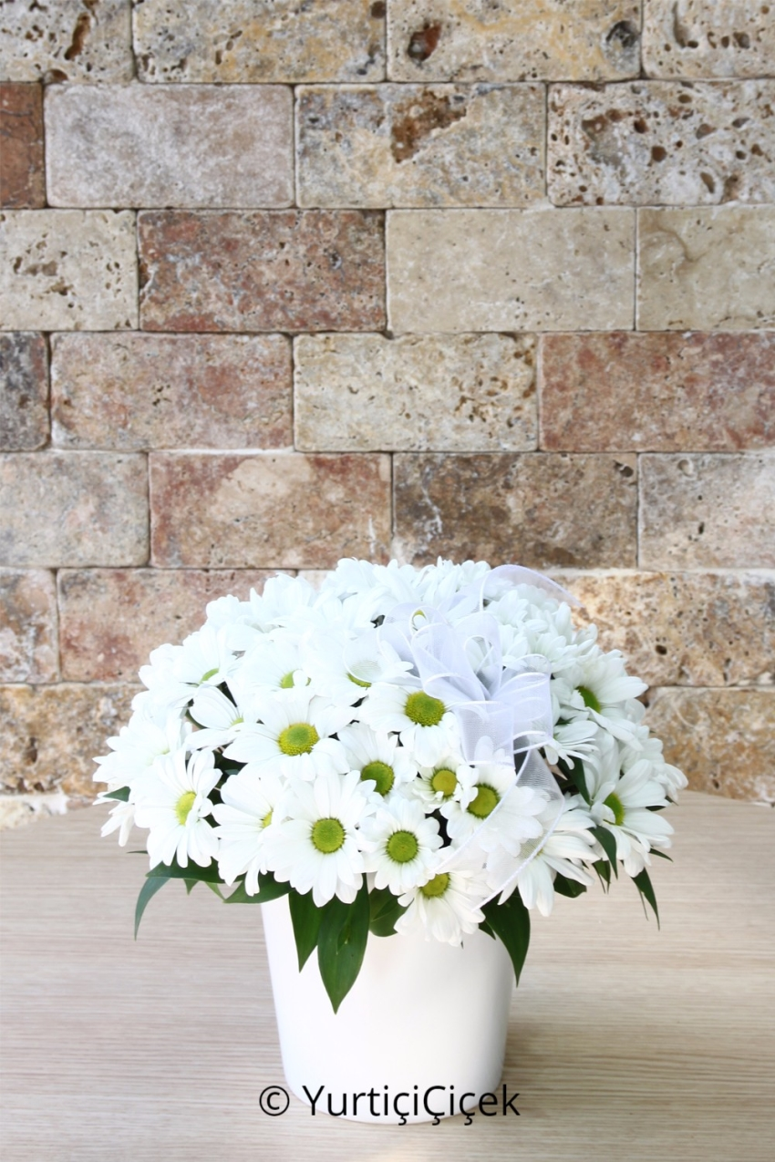 Arrangement of white daisy white dreams mirror to reflect your heart is content to say hello to a good day for the wonderful gifts from loved ones.
