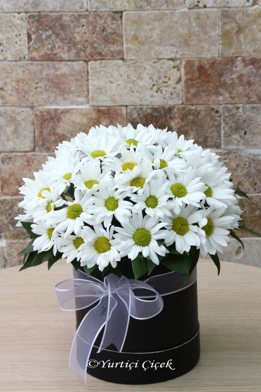 In the round box, white daisies have something to tell for your loved ones. You can send it now.