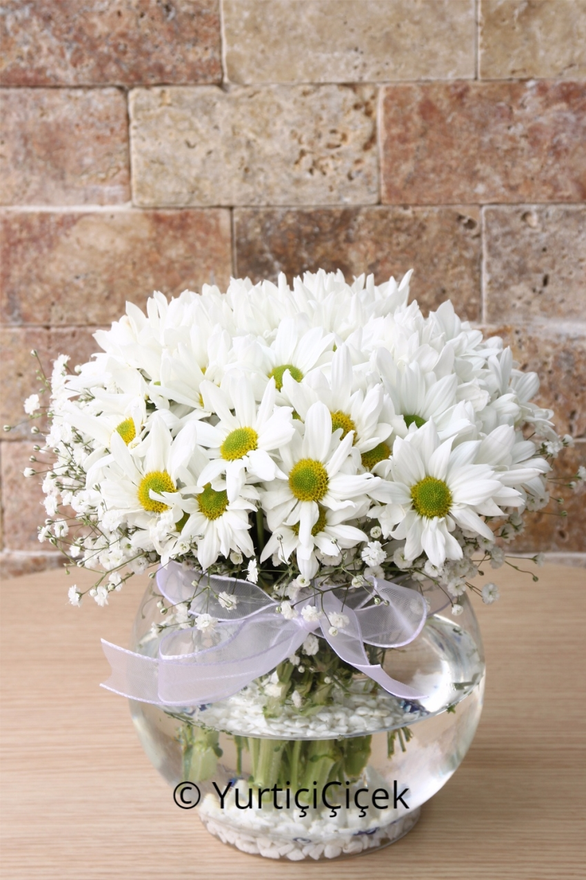 They deserve the most beautiful flowers for your loved ones with Daisy